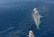 Amatör Balıkçılar İçin Uzmanından Tavsiyeler